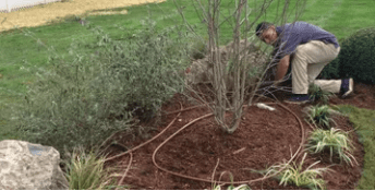 Plantings with worker