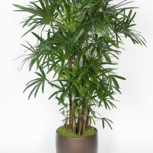 Floor Plants 5-7'