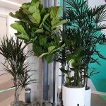 With Indoor Dining Opening, How to Use Plants for Your Restaurant During COVID-19