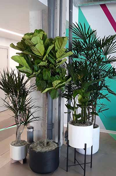 indoor plant care marin county