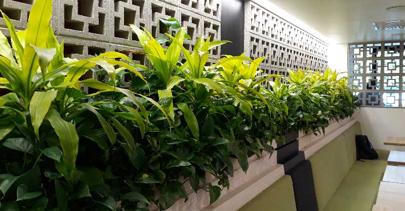 indoor plant care oakland