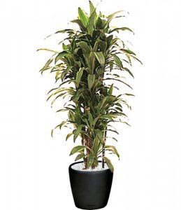 indoor plant care bay area