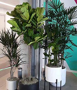 office plant grouping