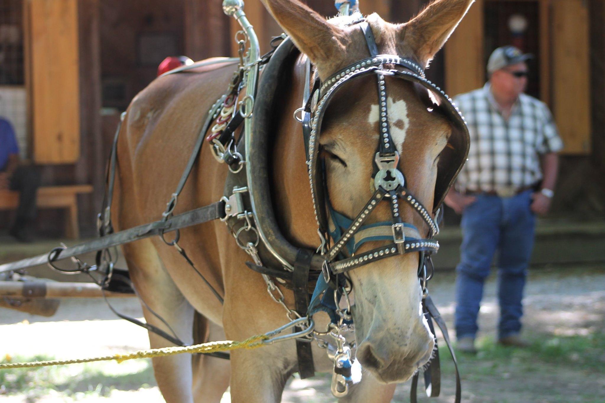 Dyer County Fair (Dyersburg, TN)