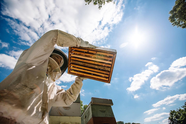 Fly-in: Williams Honey Farm (Franklin, TN)