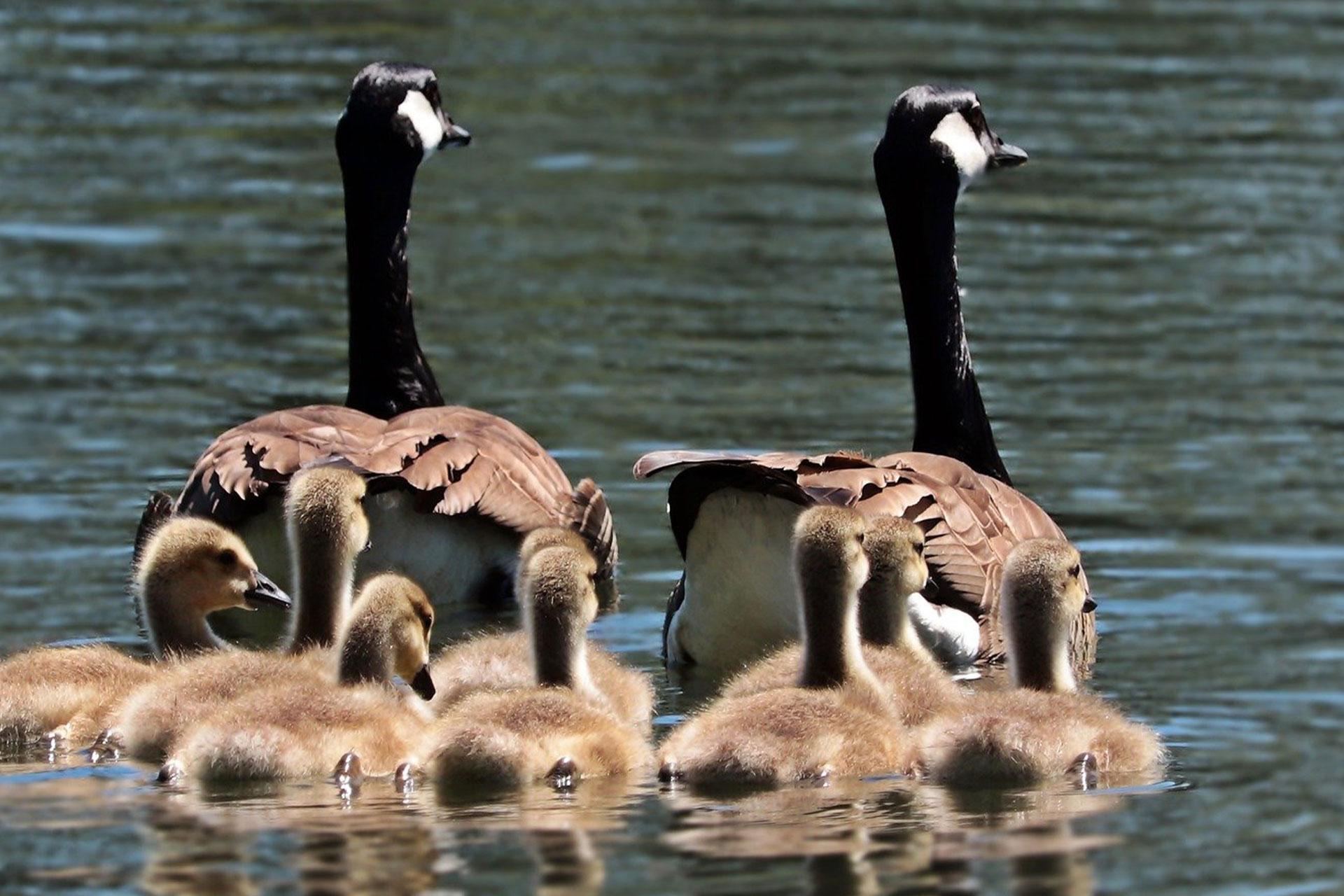 Bird Cities Along Wisconsin's Great River Road