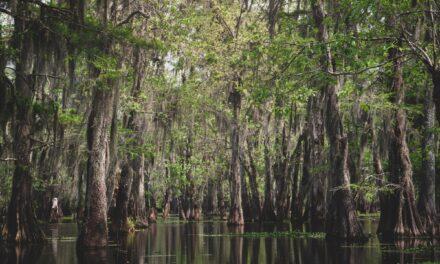 Swamp Tours in Louisiana's Honey Island Swamp!