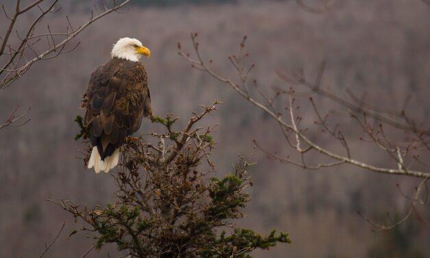 A Wisconsin Eagle Tour!