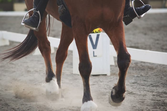 Legs of a Dressage Horse