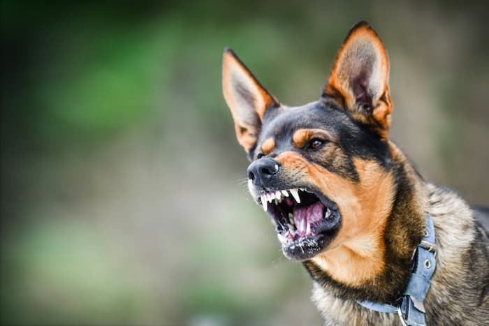 mean dog with teeth