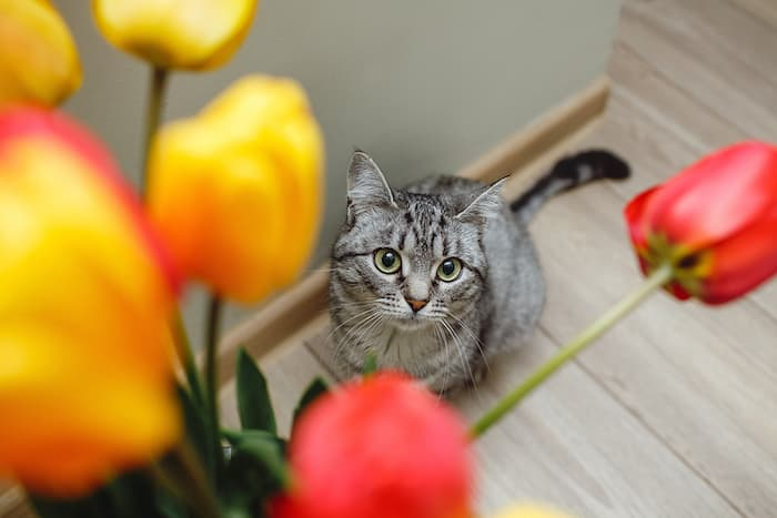 cat looking up at flowers