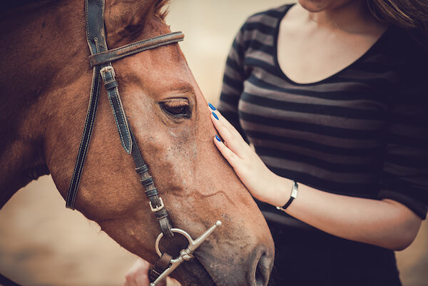 Animal Assisted Therapy Horse