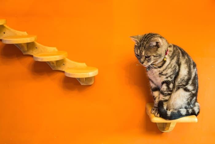 cat climbing