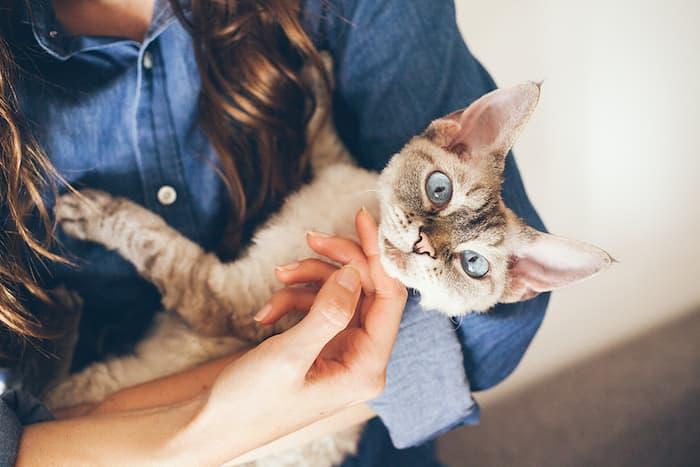 woman holding a devon rex cat