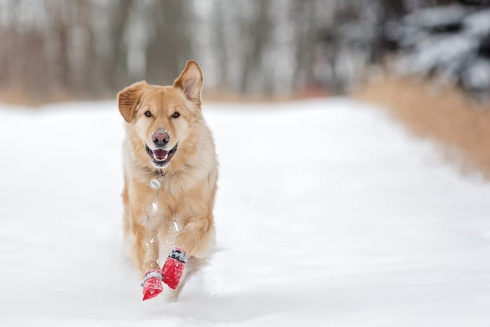 dog booties in snow