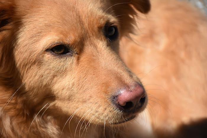 closeup of dog