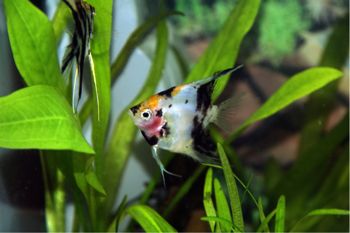 fish in tank with plants