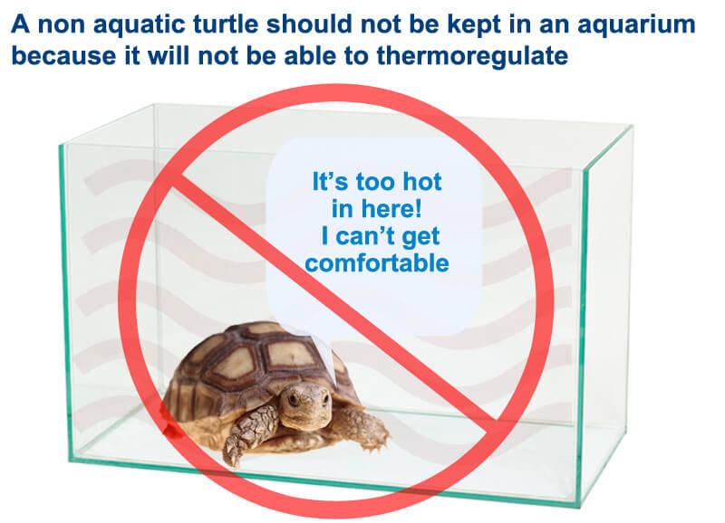 Aquariums are not suitable for non aquatic turtles