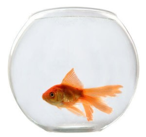 size of a goldfish bowl