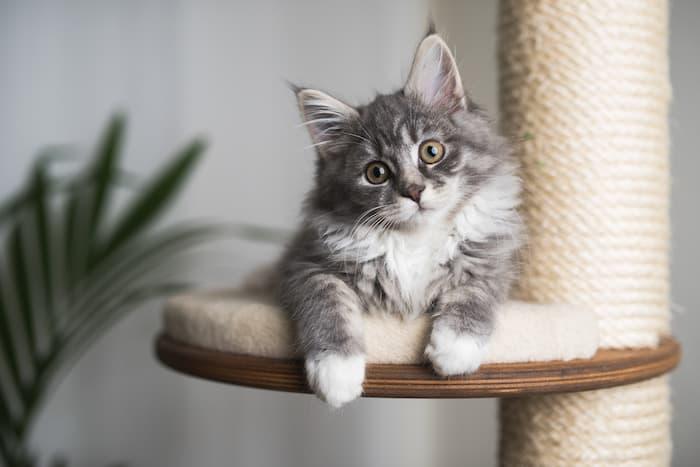 kitten resting on a cat tree