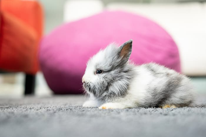 bunny in the house