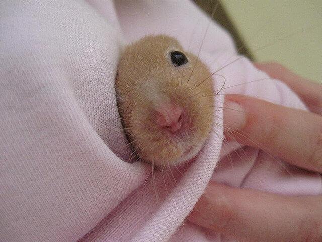 sick hamster treatment care