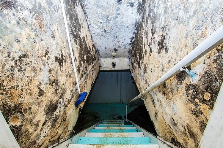 Mold Remediation Services