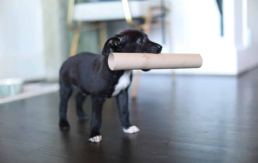 Puppy with tissue paper roll core in its mouth