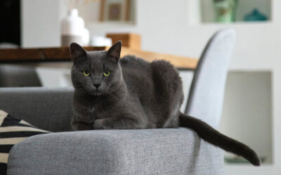 Pet-Friendly Apartment Tips for Keeping Your Cat Content
