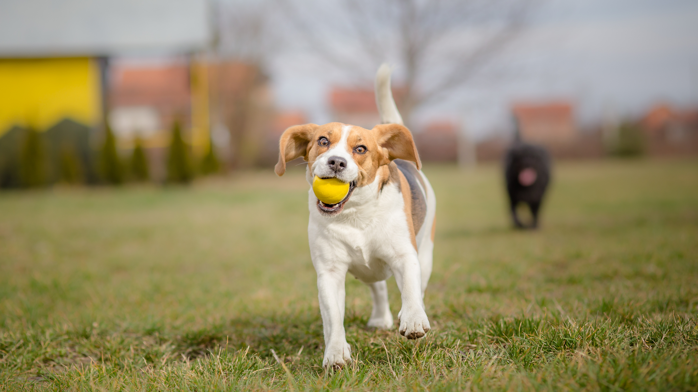 Pet Sitter in South Tampa