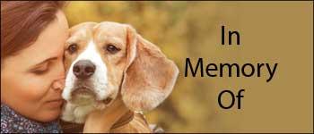 Donate In Memory of