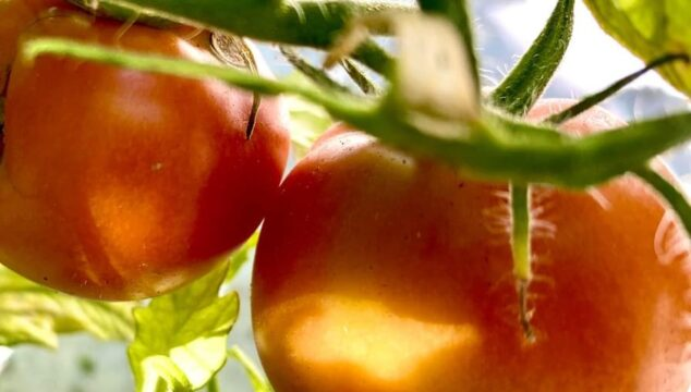 Good Things Growing: How to Plant and Grow a Garden in Coronado!