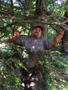 landscape worker pruning