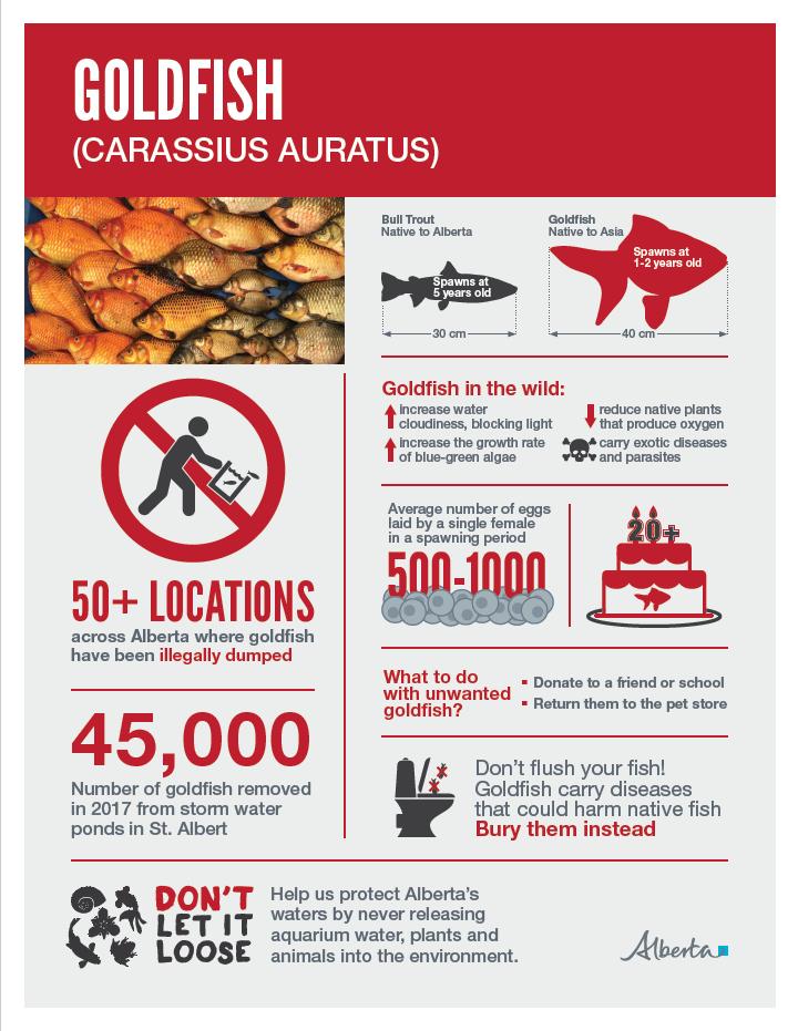 Goldfish Infographic