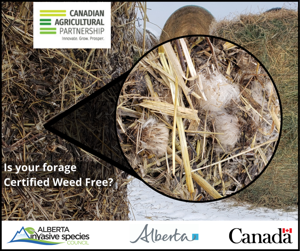 Weed Free Forage