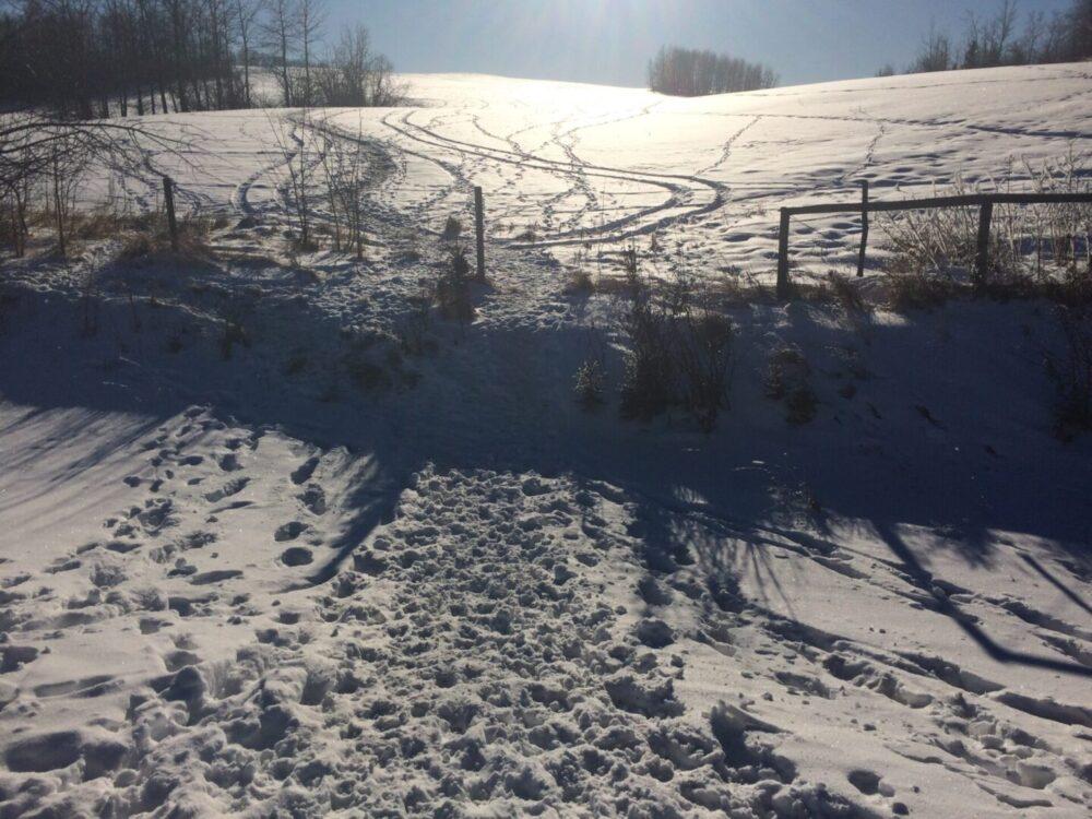 Large sounder tracks west of capture site
