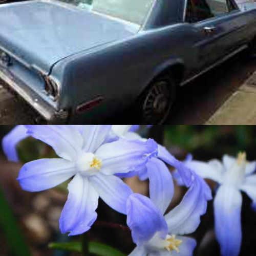 el coche es azul. Las flores son azules