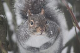 squirrel in French - un écureuil