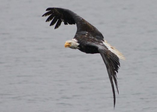 a bird of prey in French - un oiseau de proie