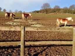 a horse in Spanish - un cabal