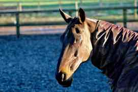 un cheval brun - a brown horse in French