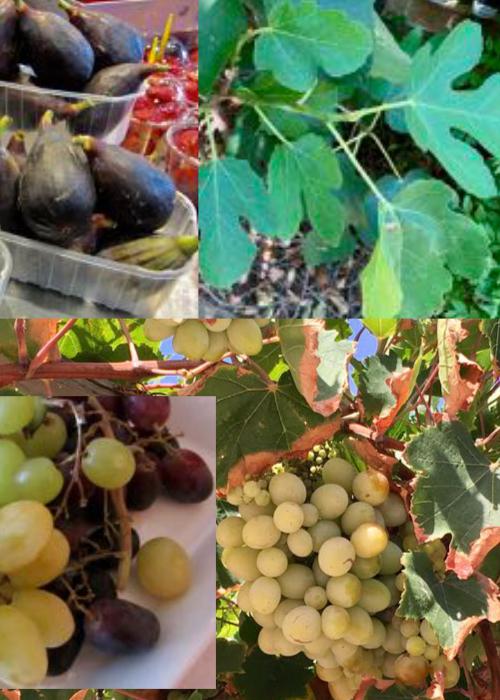 Hay higos y uvas en otoño