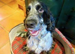 I have a dog in Spanish = Tengo un perro.