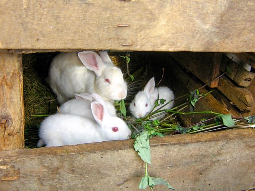 I have rabbits in Spanish = Tengo conejos