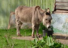 a donkey in French = un âne