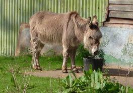 a donkey in French = un âne