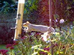 a squirrel in French = un écureuil