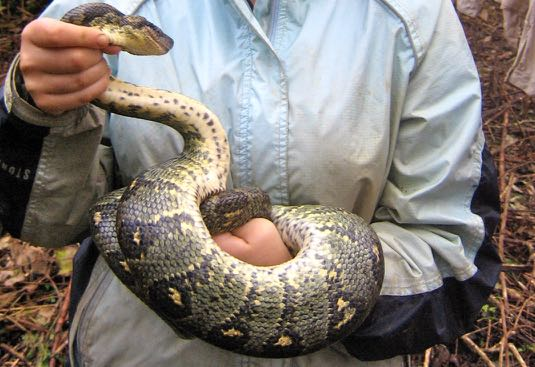 a snake in French = un serpent