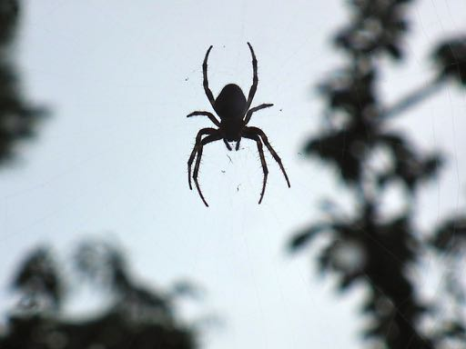 a spider in French = une araignée