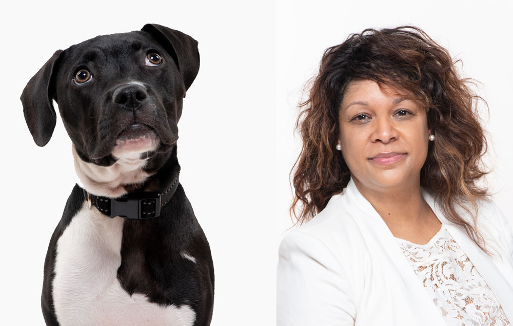 Mini Sessions for Dogs and Humans